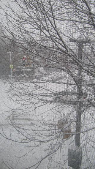 SnowyBrooklyn