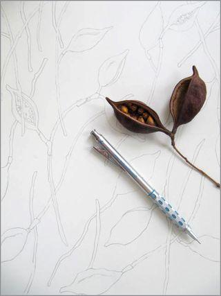 Kurrajong Treepod Drawing